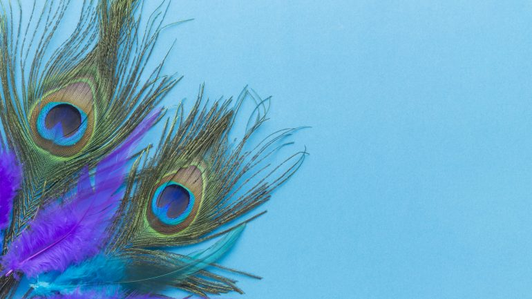 colorful-peacock-feathers-with-copy-space